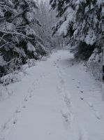 Winterwald_big